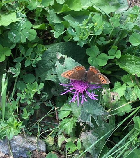 A Lorenzago Il Nuovo Giardino Delle Farfalle E Delle Api
